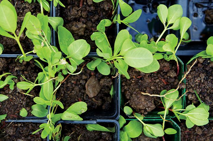 Conseils d'une passionnée pour entamer la saison du jardinage