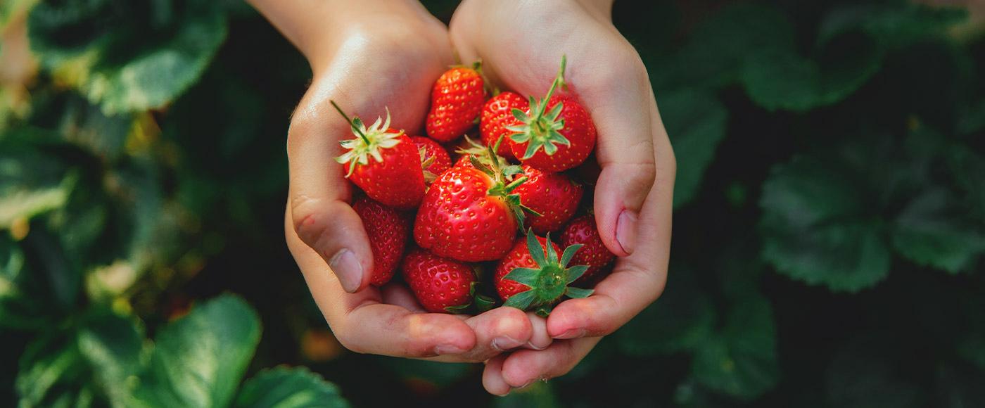 Comment profiter des fraises et framboises d'ici cet été