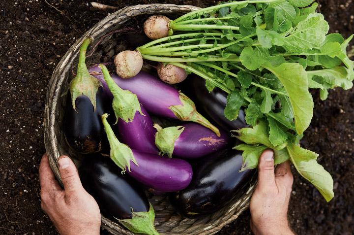 Quel type de jardinier êtes-vous ?