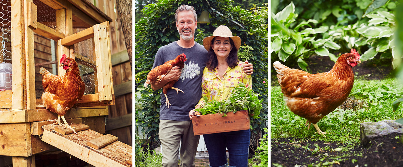 Des poules à la maison pour des œufs frais au quotidien