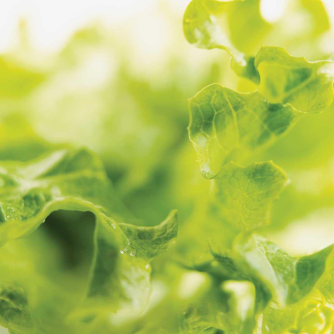 Salade verte et vinaigrette à la mélasse