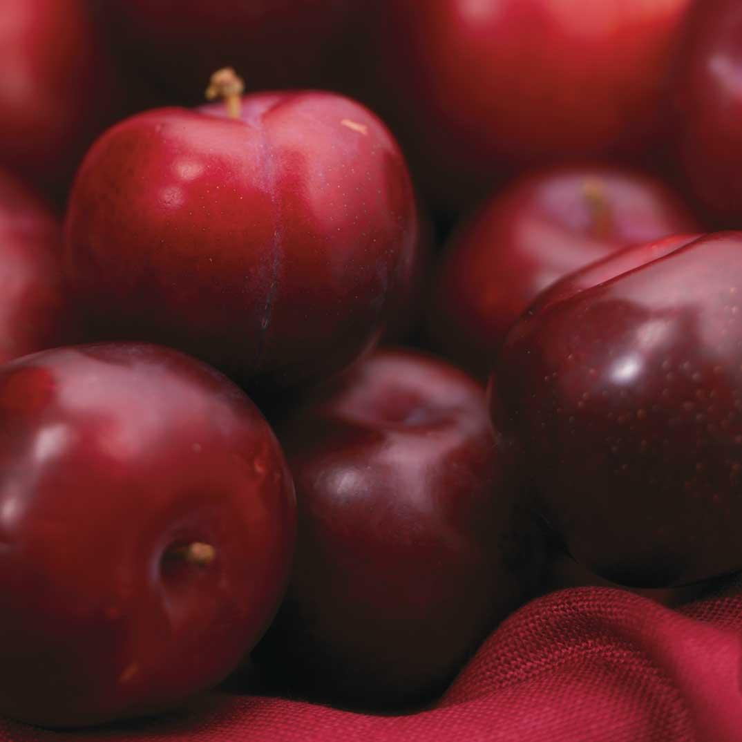 Salade de prunes rouges au miel et au romarin