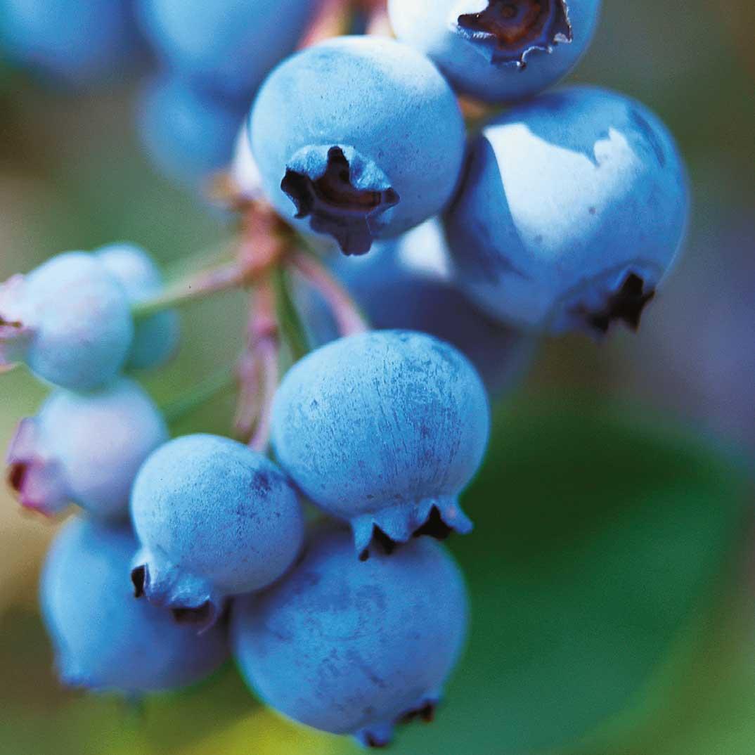 Blueberry Pudding Cake