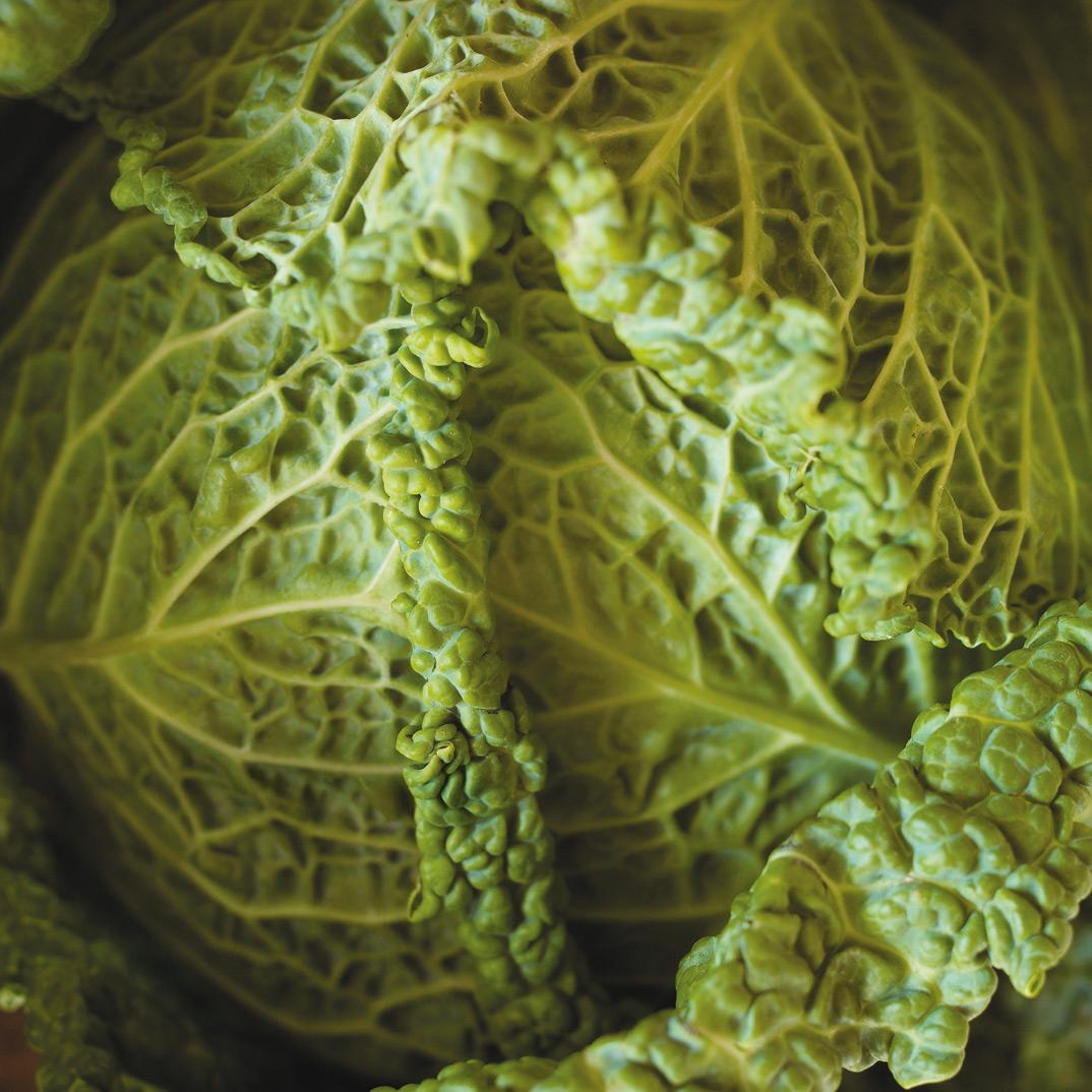Quick Kimchi  (Korean Pickled Cabbage)
