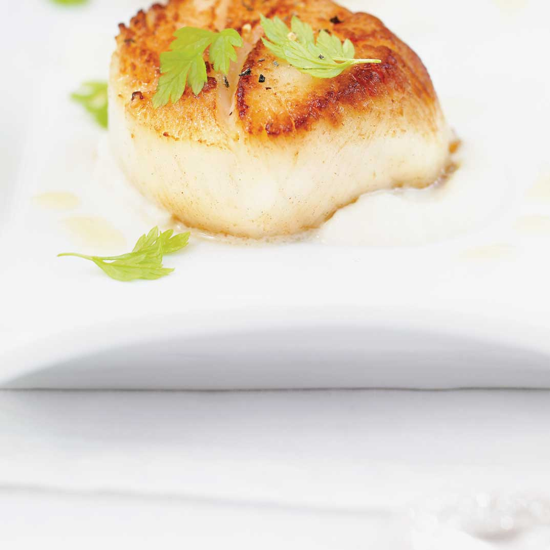 Seared Scallops on Celery Root Purée