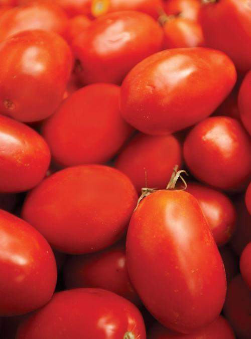 Sauce Tomate Avec Tomates En Conserve Ricardo