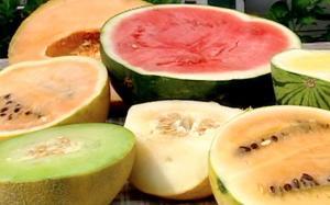 Melon - Île Perrot