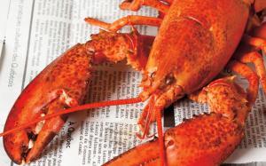 Comment différencier les sexes des homards