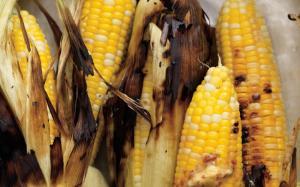 Griller du maïs