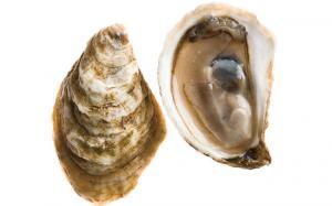 Comment ouvrir des huîtres