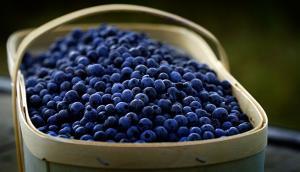 Saint-Félicien Wild Blueberries