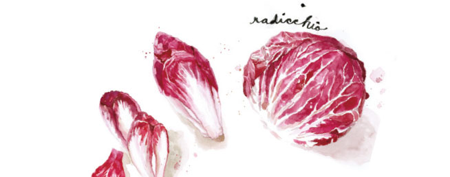 Endives rouges